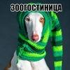 ЗООГОСТИНИЦА  и ЛАКОМСТВА для собак