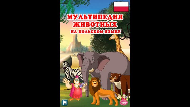 Мультипедия животных на польском языке Litera K - Kanarek