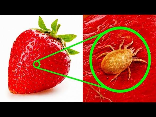 Еда под микроскопом Вы их никогда не видели