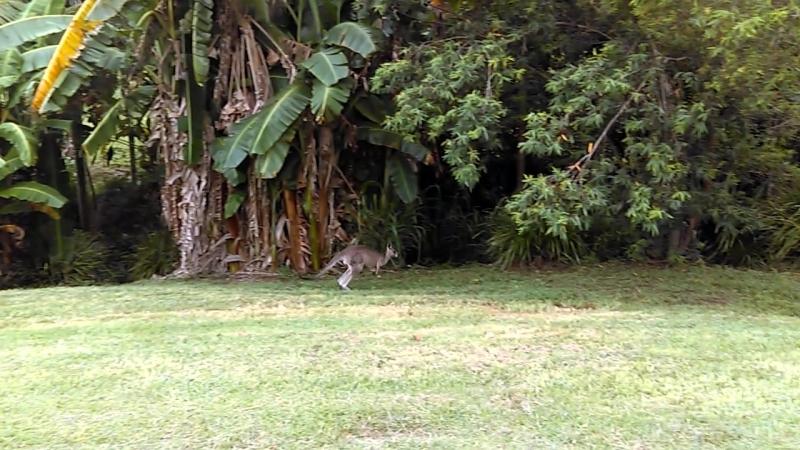 Близки срещи от трети вид в Ecovillage at Currumbin, Queensland, Australia