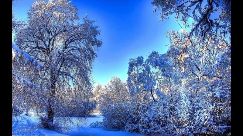 Обои На Телефон Зимний Лес