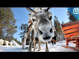 Катаемся на новогодних оленях