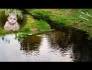 3 ЧАСА - Расслабляющая Музыка, Пение Птиц, Журчание Воды для Малыша и Мамы ♪ Звуки Природы для Сна