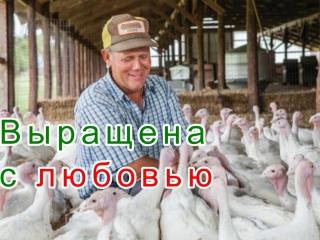 Фермерское хозяйство. Натуральная индейка и курица. Выращено с любовью!