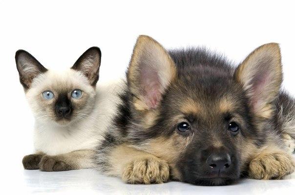 Кто умнее, коты или собаки?, изображение №1