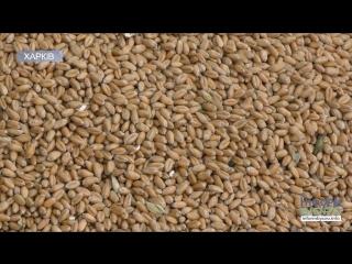 У Харківській області завершили збір ранніх зернових