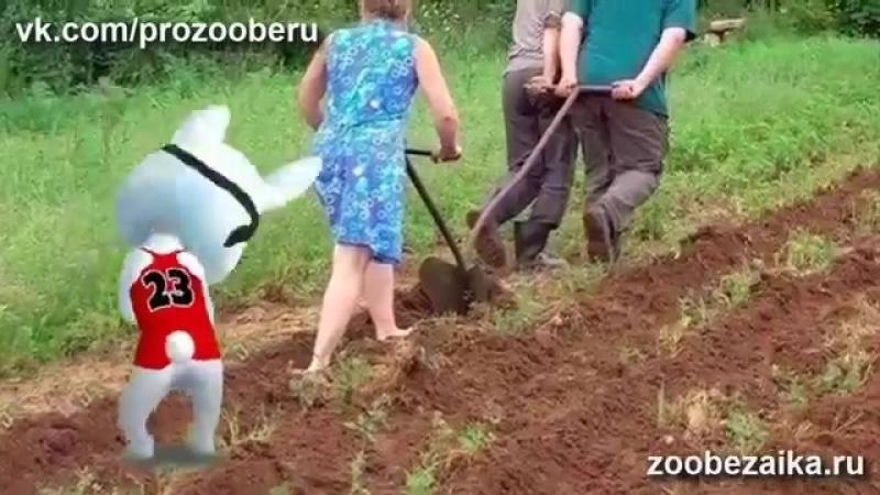 Otdyh zyatya u tyoshhi na dache SHutochnaya pesnya peredelka popurri ZOOBE Muz Zajka