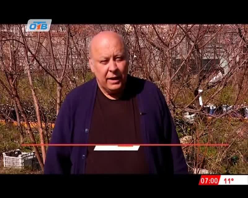 ОТВ Прививка окулировкой