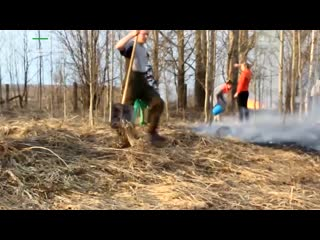 Центр для животных чуть не сгорел из-за любителей поджигать траву