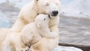 Những bà mẹ động vật như thế này cần được bảo tồn - Khi mẹ bảo vệ con trước Móng vuốt kẻ thù