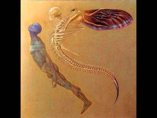 Sectio Aurea - Soul Transfer