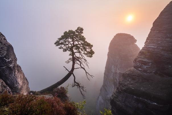 Утро в Эльбских Песчаниковых горах