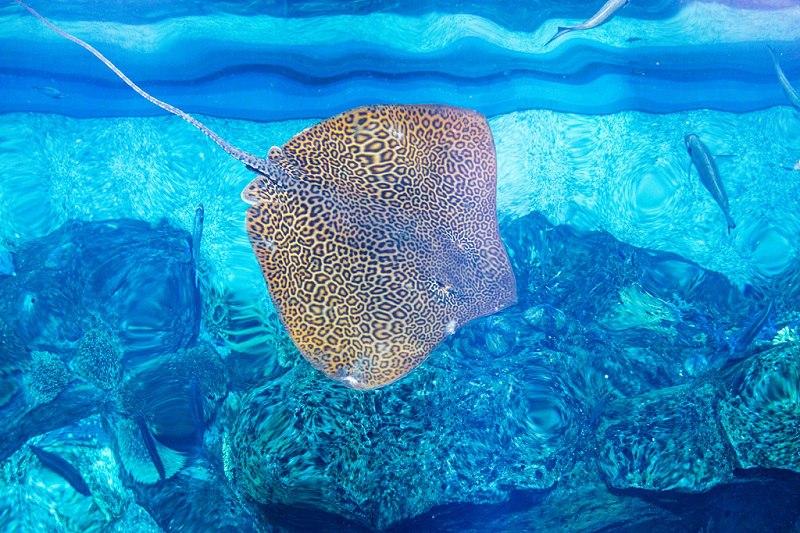 Крупнейший в мире аквариум в ТРЦ Дубай Молл, ОАЭ, изображение №8
