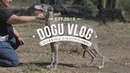 DOGU VLOG LURE COURSING SIGHTHOUNDS