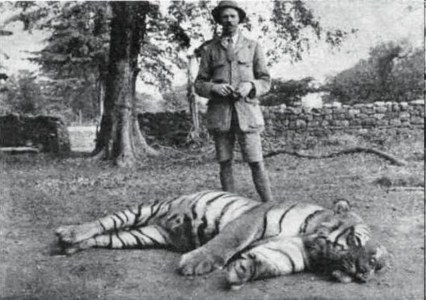 Джим Корбетт с убитой тигрицей