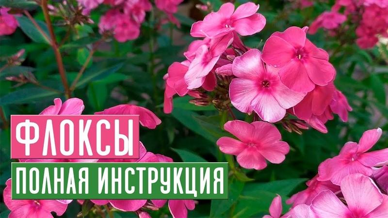 ФЛОКСЫ 🌺 Все секреты ухода за прекрасными цветами / Садовый гид