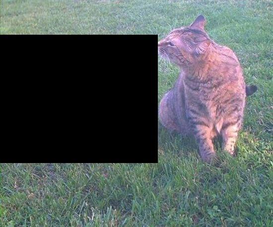 закрыть фото черным квадратом месте занесения инфекции