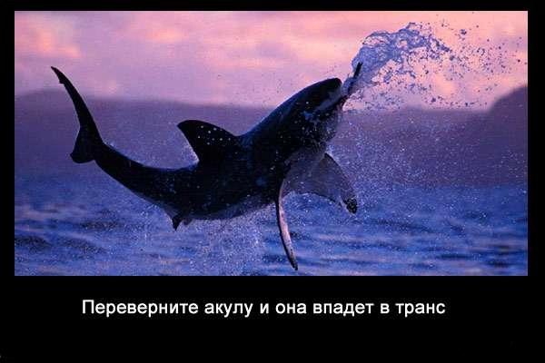 Valteya - Интересные факты о акулах / Хищники морей.(Видео. Фото) - Страница 2 UghhGXFcSWU