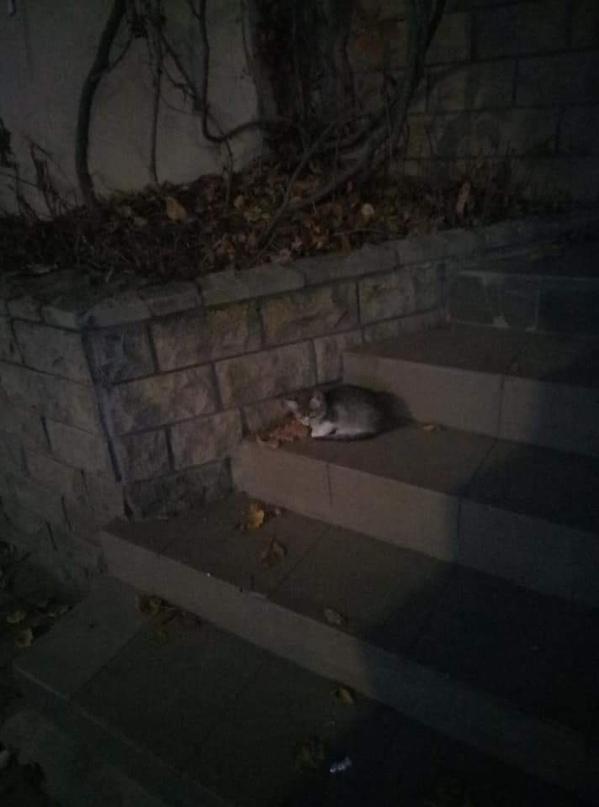 Было - стало... Не бойтесь брать бездомных животных..Этот малыш тоже ищет дом......