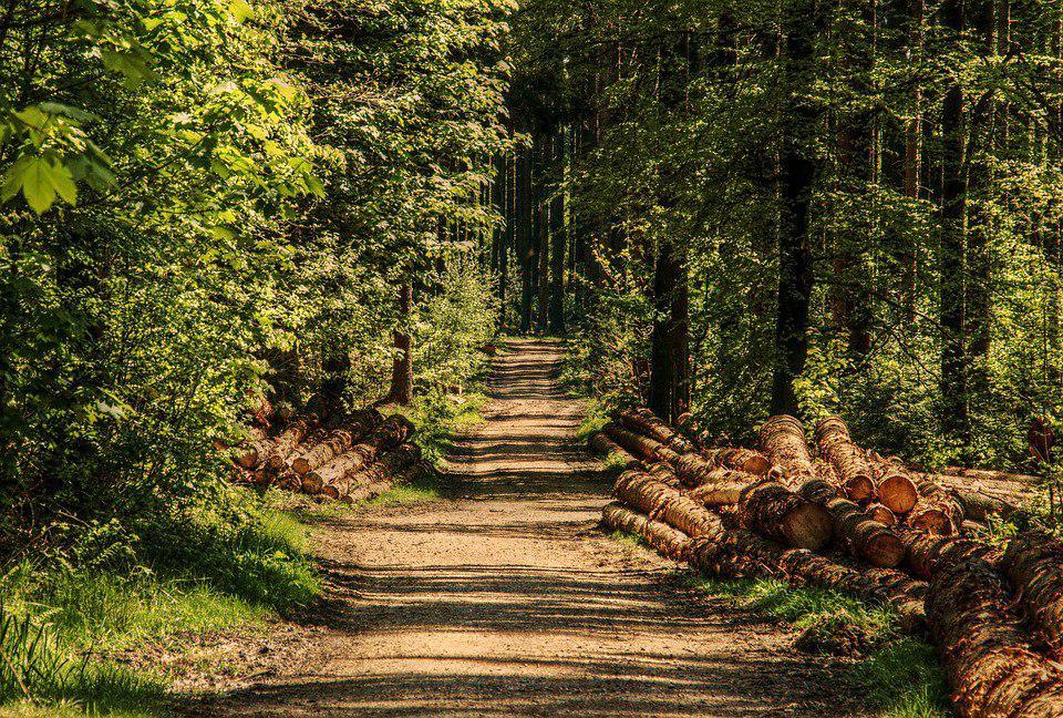 О жизни людей на лесных кордонах в середине ХХ века расскажут в музее на Кузьминской