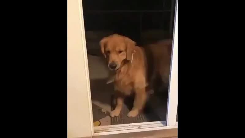 Animals_videoo_B1a5Rqung5H.mp4