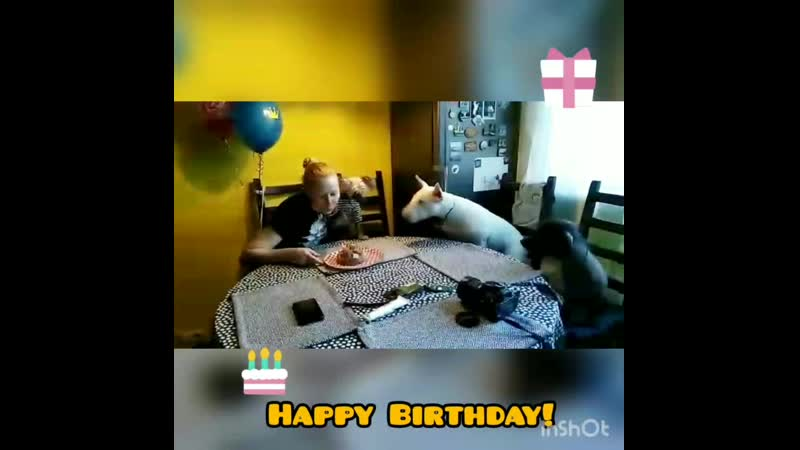 Кузя. День Рождения