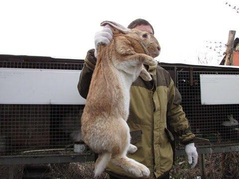 Кролики Лучшие корма для ваших питомцев