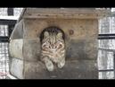 Люди приютили истощённого котёнка, а он оказался вовсе не домашним котом!