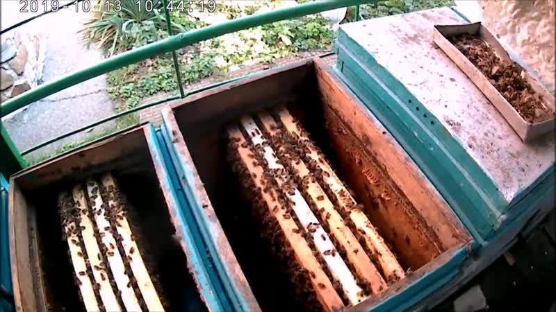 Провокация осеннего облёта пчел-осушка рамок.