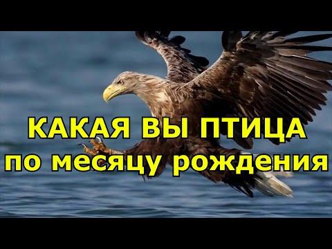 Какая птица ваше второе Я по дате рождения
