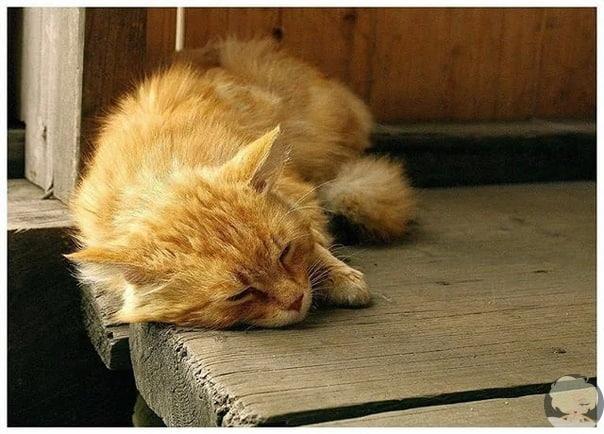 Рыжий кот Кеша  смотритель острова «Кижи»