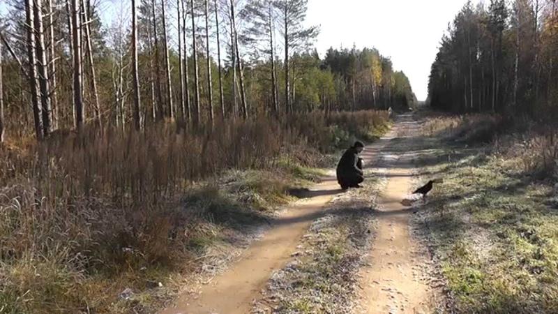 адреналин от ворона