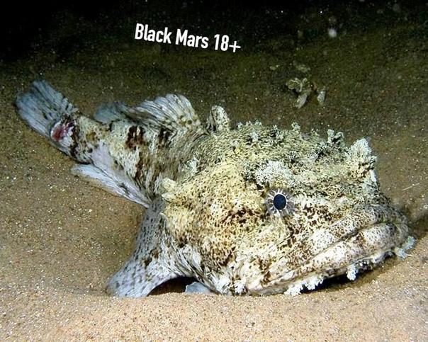 Жуткая рыба-жаба
