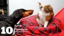 Смотреть приколы про кошек и собак видео до слёз 2020 10