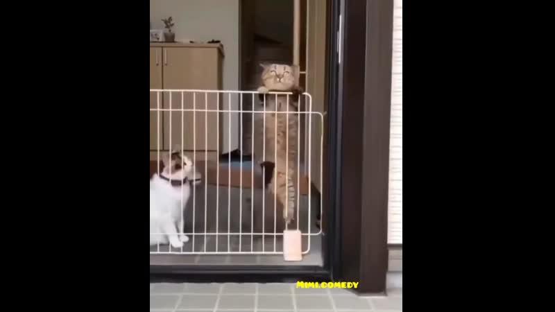 Побег без свидетелей
