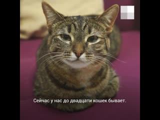 Истории котиков из котокафе в Екатеринбурге
