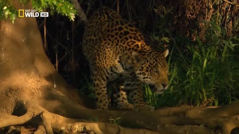 Дикая природа Амазонки Колыбель жизни National Geographic на русском 720p