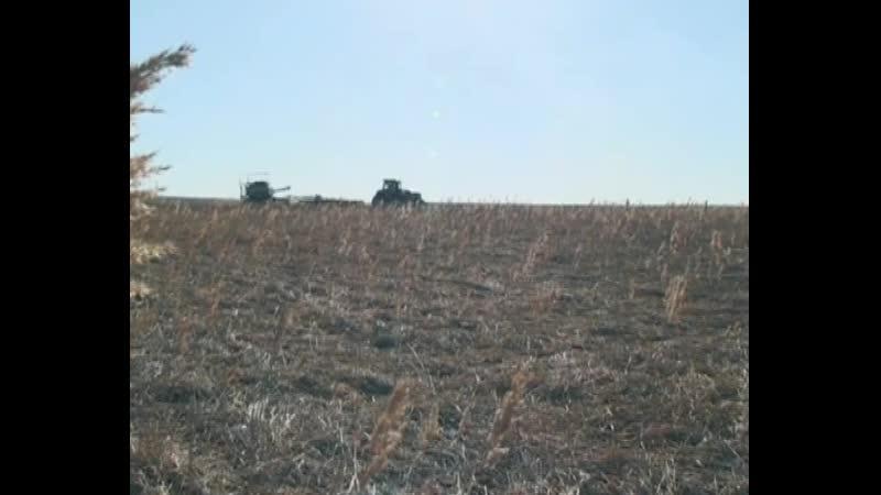 Аграрии ДНР по ряду показателей перевыполнили план сева поздних яровых и кормовых культур