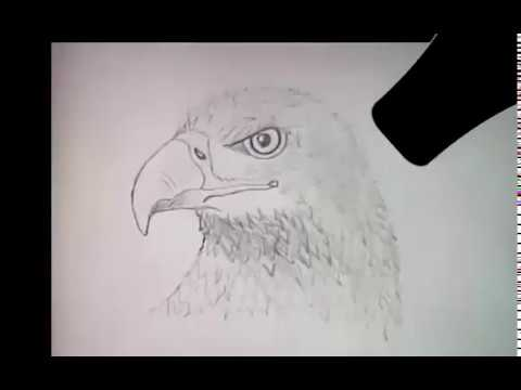 Как Нарисовать Орла карандашом - How to Draw a pencil Eagle