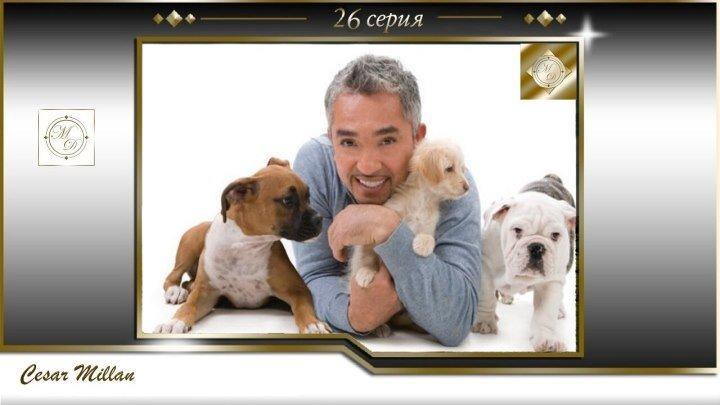 26 серия Сезар Миллан Переводчик с собачьего Gus Ava 08 2004