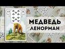 Значение карты Ленорман: Медведь  