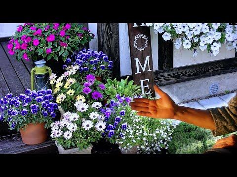Как не ошибиться при выборе расцветок и сортов? Планируем покупку семян к следующему сезону.