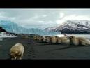 BBC Дикий Мир Будущего 5 миллионов лет спустя / 1 серия