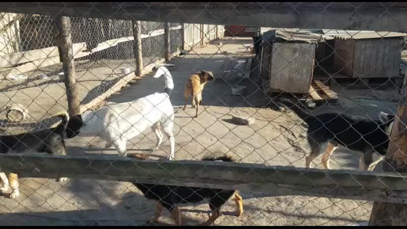 Жизнь приюта. Собаки ждут ужин