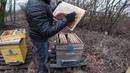 Ошибки начинающих пчеловодов, гибель пчёл от клеща Варроа.