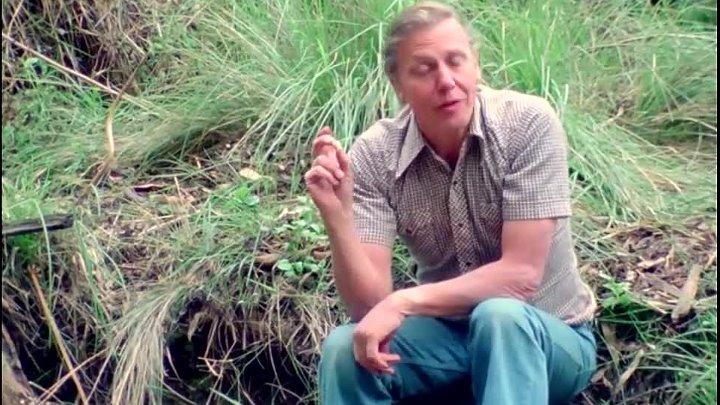 BBC Жизнь на Земле 09 Происхождение млекопитающих Документальный животные 1978