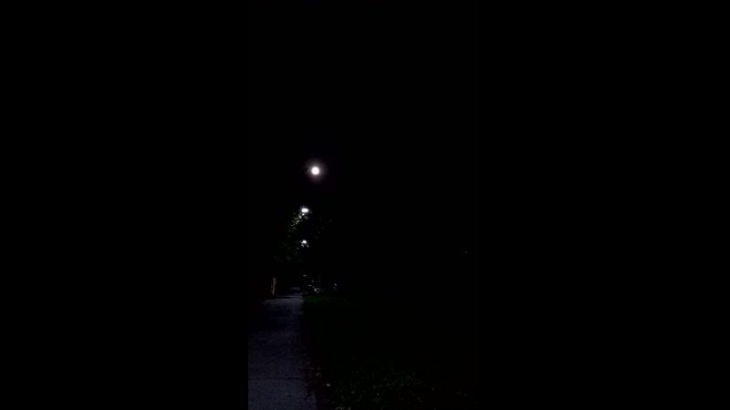 Ночь луна неясыть со мной🚶♀️🦉