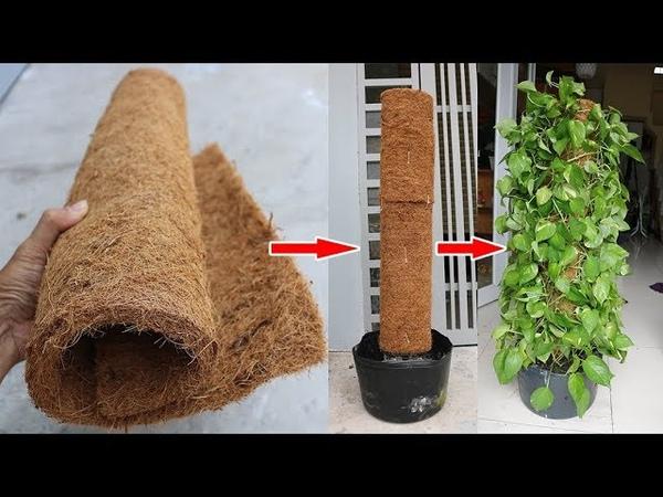 Thảm xơ dừa lá trầu bà h y thử cách này Coir mats money plant try this