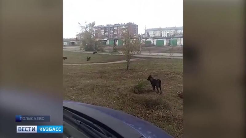 Стая собак держит в страхе жителей кузбасского города