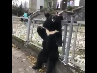 В Иркутской области циркового медведя в знак протеста привязали к забору